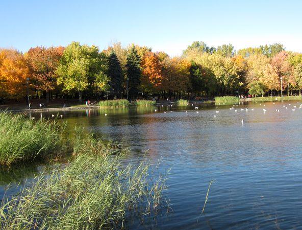 Beaver Lake, Montreal