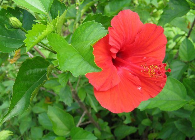 Wild Flowers of Palau 2