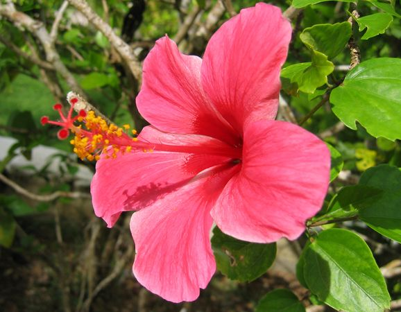 Wild Flowers of Palau 4