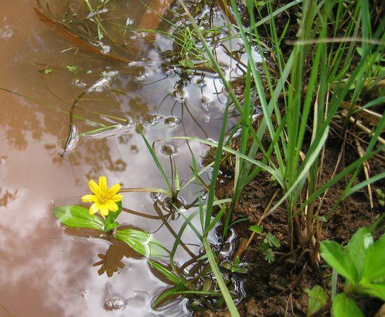 Wild Flowers of Palau 8